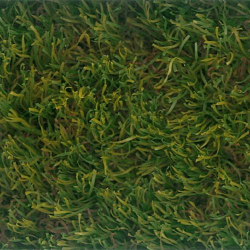 toure-spac-MDPE